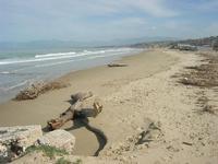 Spiaggia Plaja - 15 febbraio 2010   - Castellammare del golfo (1353 clic)