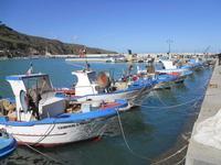 al porto - 21 febbraio 2010   - Castellammare del golfo (1506 clic)