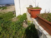 Spiaggia Plaja - gatti - 24 gennaio 2010  - Castellammare del golfo (1776 clic)