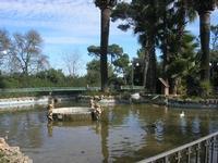 Giardino Pubblico Vittorio Emanuele - vasca - particolare - 5 dicembre 2010 CALTAGIRONE LIDIA NAVARR