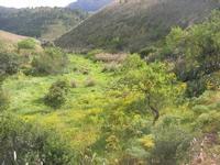 area archeologica: panorama - 11 aprile 2010   - Segesta (1753 clic)