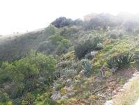 area archeologica: il Tempio - 11 aprile 2010   - Segesta (3868 clic)