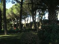 Giardino Pubblico Vittorio Emanuele - 5 dicembre 2010  - Caltagirone (1423 clic)