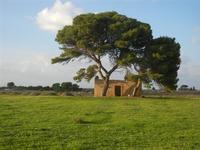 pini e casa diroccata - 13 novembre 2011   - Nubia (580 clic)