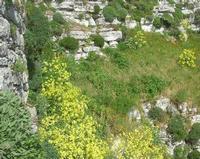 parete scoscesa - Castello di Venere - 5 aprile 2010  - Erice (2454 clic)