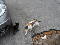 gatti in via Niso - 17 gennaio 2010   - Pizzolungo (3307 clic)