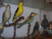 Museo Ornitologico - 19 settembre 2010  - Mazara del vallo (1286 clic)