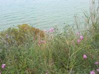 flora e mare - periferia est della città - 23 aprile 2010  - Castellammare del golfo (1541 clic)
