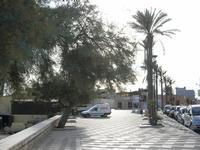 alberi e palme sul lungomare - 19 settembre 2010  - Tre fontane (3864 clic)