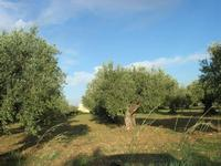 oliveto - 19 settembre 2010  - Triscina (3743 clic)