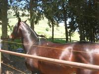 Montagna Grande - cavallo all'interno di un recinto - 1 maggio 2010  - Salemi (2013 clic)