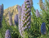 flora e Monte Cofano - 14 marzo 2010  - Cornino (2359 clic)