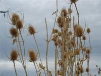 flora - 25 settembre 2011  - Scopello (808 clic)