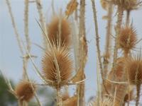 flora - 25 settembre 2011  - Scopello (815 clic)