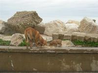 una cagna con i suoi cuccioli in zona porto - 7 marzo 2010   - Trapani (1862 clic)