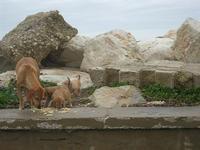 una cagna con i suoi cuccioli in zona porto - 7 marzo 2010   - Trapani (2006 clic)
