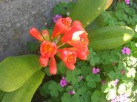 fiori - 10 aprile 2011  - Alcamo (1071 clic)