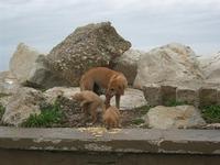 una cagna con i suoi cuccioli in zona porto - 7 marzo 2010   - Trapani (1881 clic)