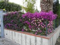 aiuola fiorita - 12 giugno 2011  - Alcamo (843 clic)