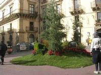 albero di Natale in piazza - 4 dicembre 2010 CALTAGIRONE LIDIA NAVARRA