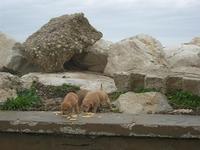 cuccioli in zona porto - 7 marzo 2010   - Trapani (2111 clic)