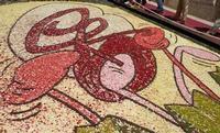 Infiorata 2010 - Bozzetti ispirati al tema: Musica dipinta: le forme e i colori della musica - ALLEGRIA - Via Nicolaci - 16 maggio 2010  - Noto (2694 clic)