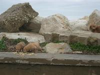 cuccioli in zona porto - 7 marzo 2010   - Trapani (2003 clic)