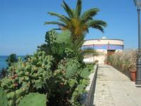 ficodindia ornamentali e palma in Via Vittore Pisani - 30 settembre 2010  - Castellammare del golfo (1355 clic)