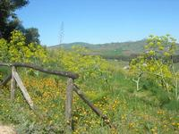 flora e panorama - 10 aprile 2011  - Segesta (952 clic)
