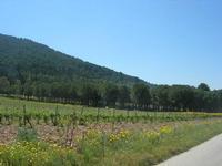 Montagna Grande - picnic nel bosco - 1 maggio 2010  - Fulgatore (3411 clic)