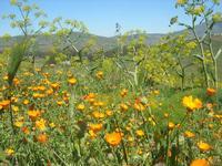flora e panorama - 10 aprile 2011  - Segesta (882 clic)