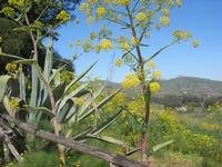 flora e panorama - 10 aprile 2011  - Segesta (888 clic)