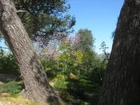 flora - 10 aprile 2011  - Segesta (1224 clic)