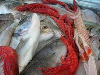 pesci in esposizione - La Cambusa - 14 luglio 2010  - Castellammare del golfo (2769 clic)