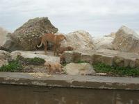 una cagna con i suoi cuccioli in zona porto - 7 marzo 2010   - Trapani (2120 clic)