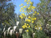 flora - 10 aprile 2011  - Segesta (1283 clic)