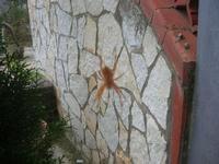 tentativo fallito di immortalare un ragno di grosse dimensioni - 19 novembre 2010  - Alcamo (1271 clic)