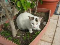 gatto al porto - 31 ottobre 2010  - Castellammare del golfo (1231 clic)