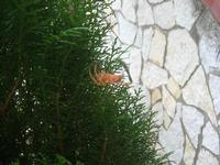 ragno di grosse dimensioni - 19 novembre 2010  - Alcamo (1388 clic)