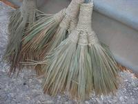 scope di giummara  (palma nana) al Belvedere - 28 agosto 2010  - Macari (2143 clic)
