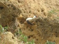gatto al porto - 31 ottobre 2010  - Castellammare del golfo (1183 clic)