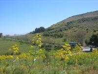 flora e panorama - 10 aprile 2011  - Segesta (954 clic)