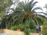 giardino - Terme Acquapia - 4 settembre 2011  - Montevago (2131 clic)