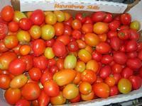 pomodori al Belvedere - 28 agosto 2010  - Macari (4416 clic)