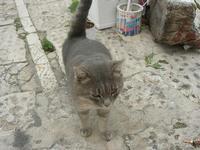 gatto - 31 ottobre 2010  - Castellammare del golfo (1364 clic)