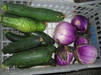 cetrioli e melanzane al Belvedere - 28 agosto 2010  - Macari (4403 clic)