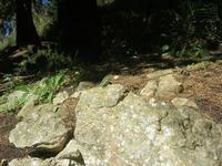 lucertola nel sottobosco - pineta - Santuario Madonna del Romitello - 10 aprile 2011  - Borgetto (1505 clic)