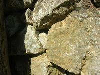 lucertola nel sottobosco - pineta - Santuario Madonna del Romitello - 10 aprile 2011  - Borgetto (1485 clic)