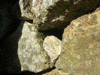 lucertola nel sottobosco - pineta - Santuario Madonna del Romitello - 10 aprile 2011  - Borgetto (1636 clic)