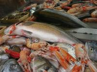 pesci in esposizione - La Cambusa - 31 ottobre 2010  - Castellammare del golfo (1560 clic)